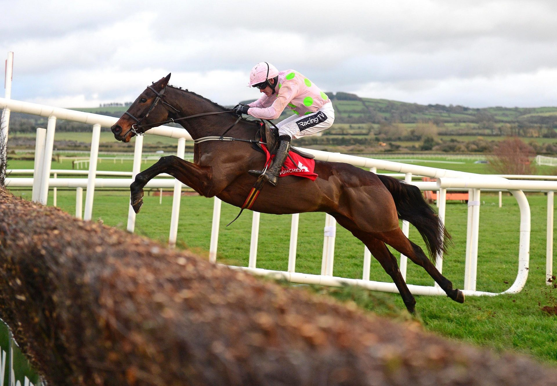 Getabird (Getaway) jumping the last before going on to win his beginners chase at Punchestown