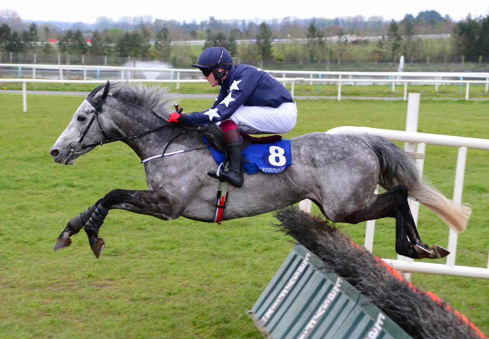 Gipsy Lee Rose (Walk In The Park) Wins At Limerick