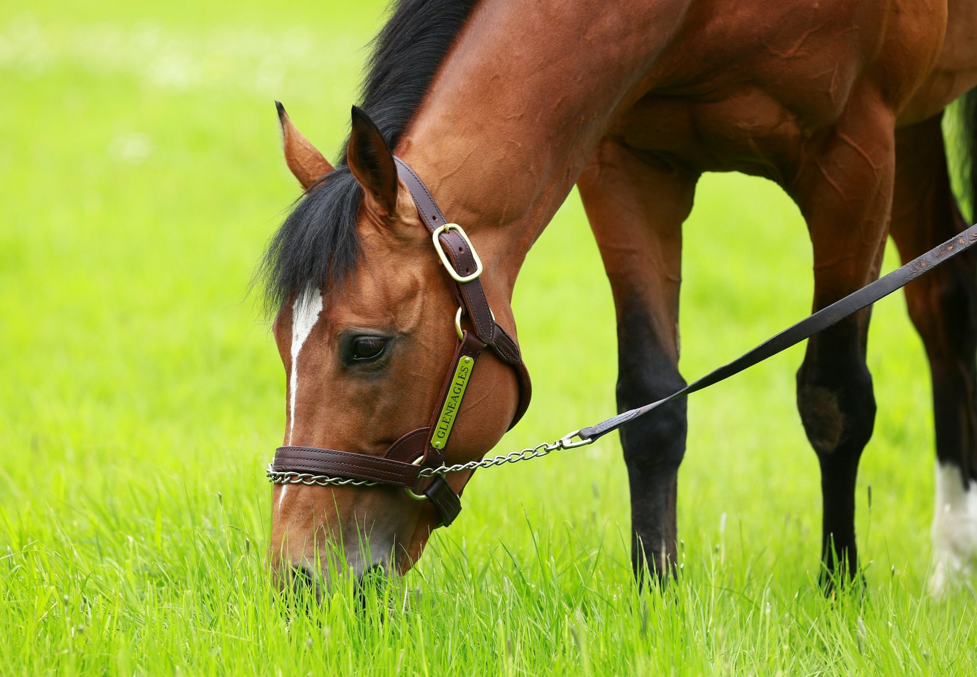 Threat (Footstepsinthesand) Wins The Gr.2 Champagne Stakes at Doncaster