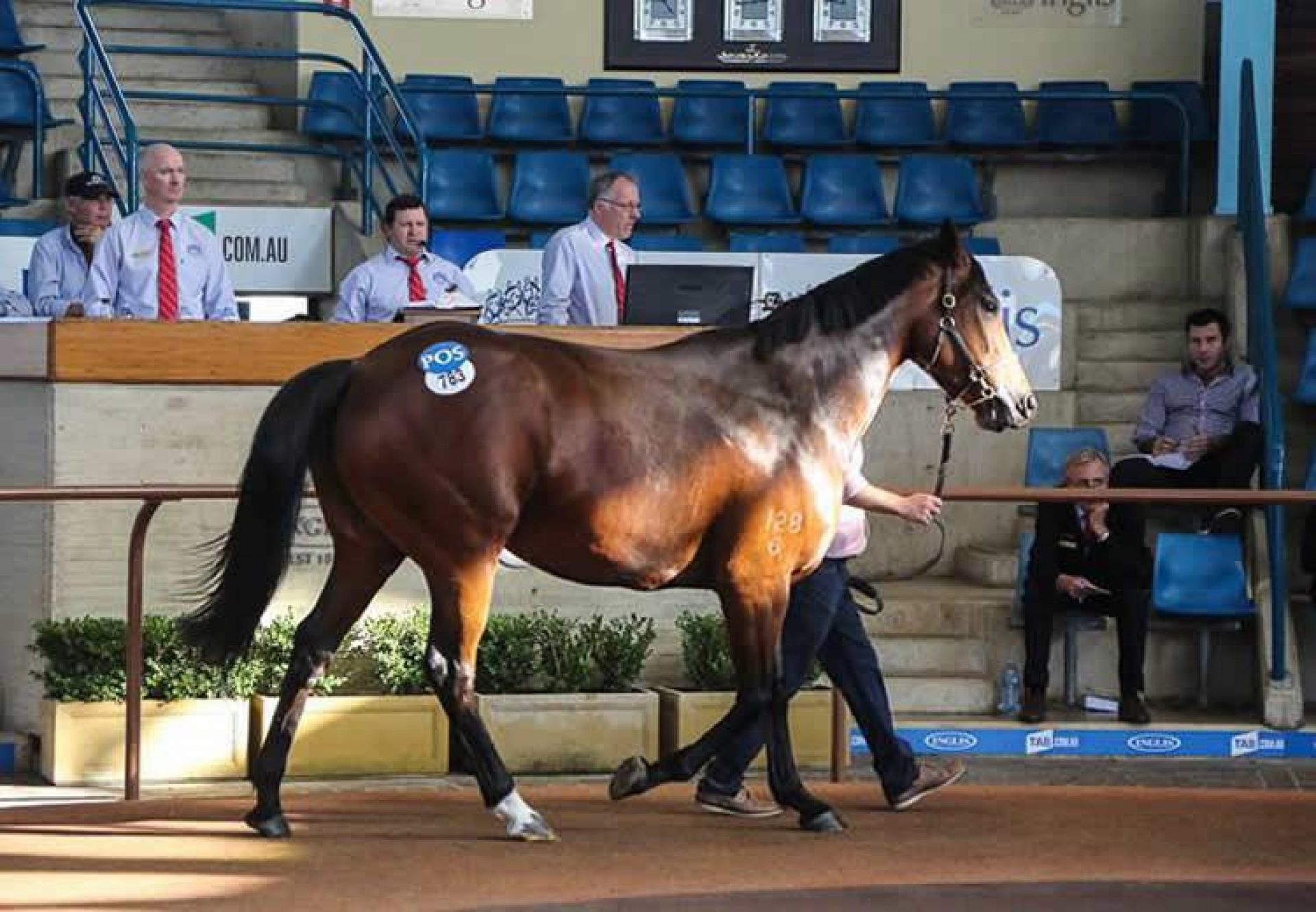 Haiku selling for $580,000at Inglis, set to be covered by Vancouver