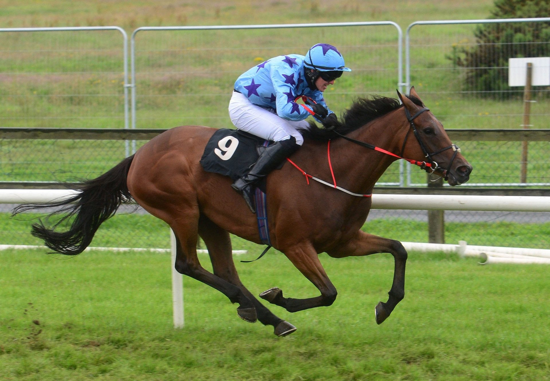 Hand In My Pocket (Mahler) Wins Her Bumper At Bellewstown