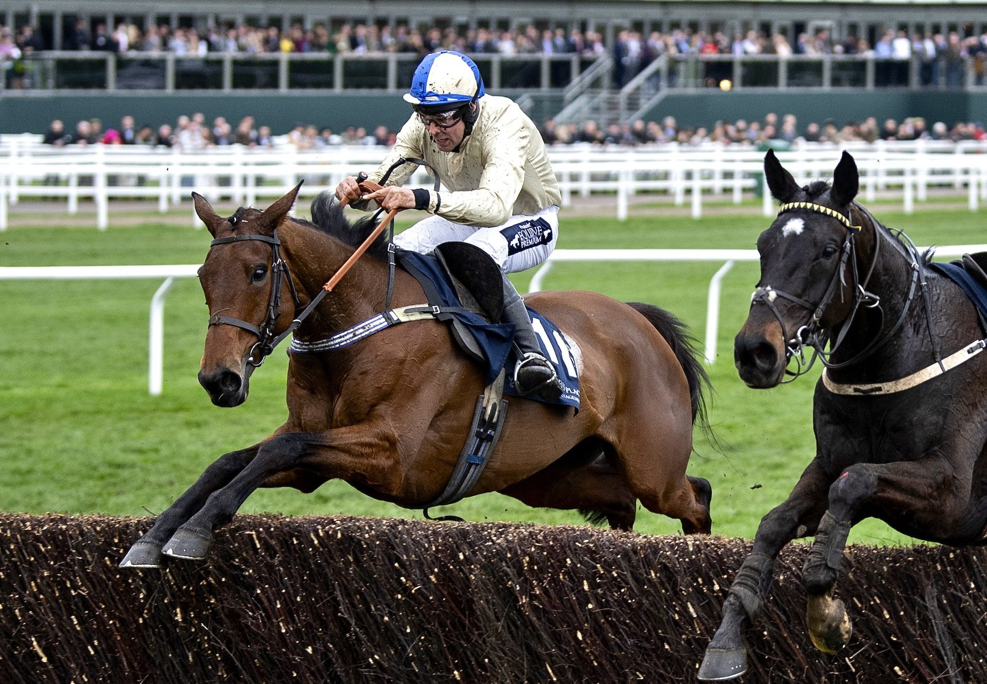 Hazel Hill Provides Milan With Cheltenham Festival Success In The Foxhunters Chase
