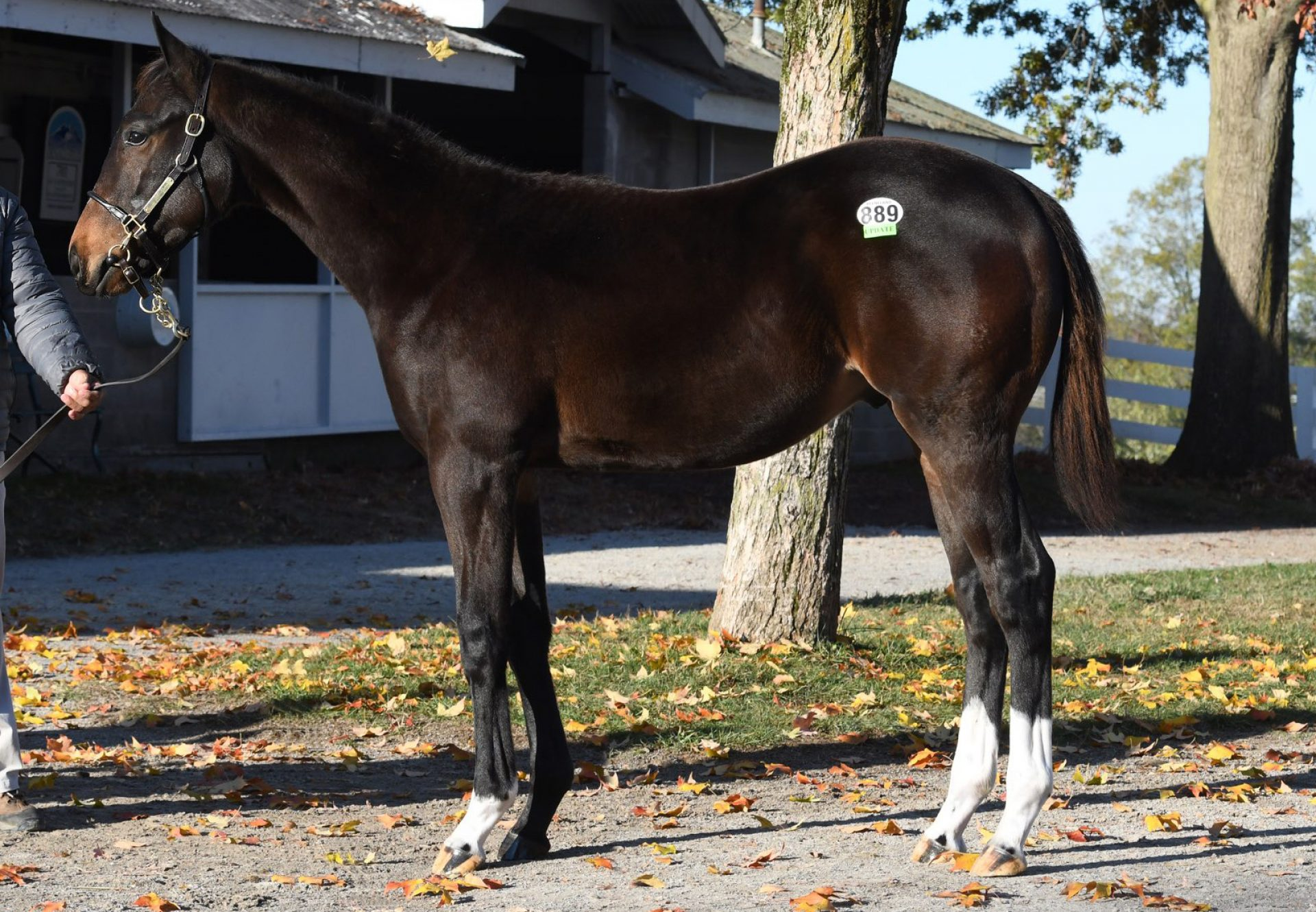 Hip 889 Classic Empire X Victory Party Kee Nov Confo