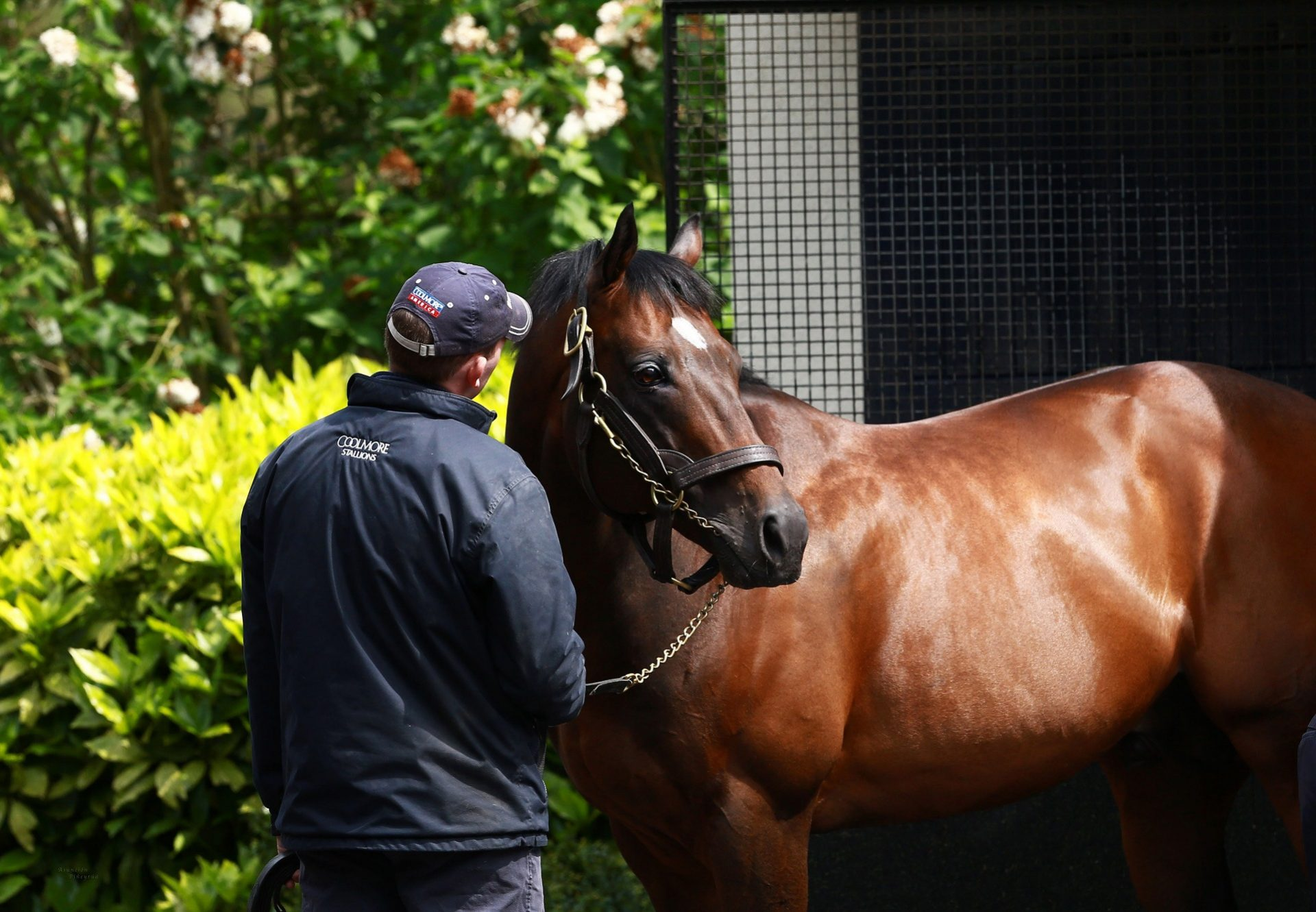 Holy Roman Emperor At The Stables