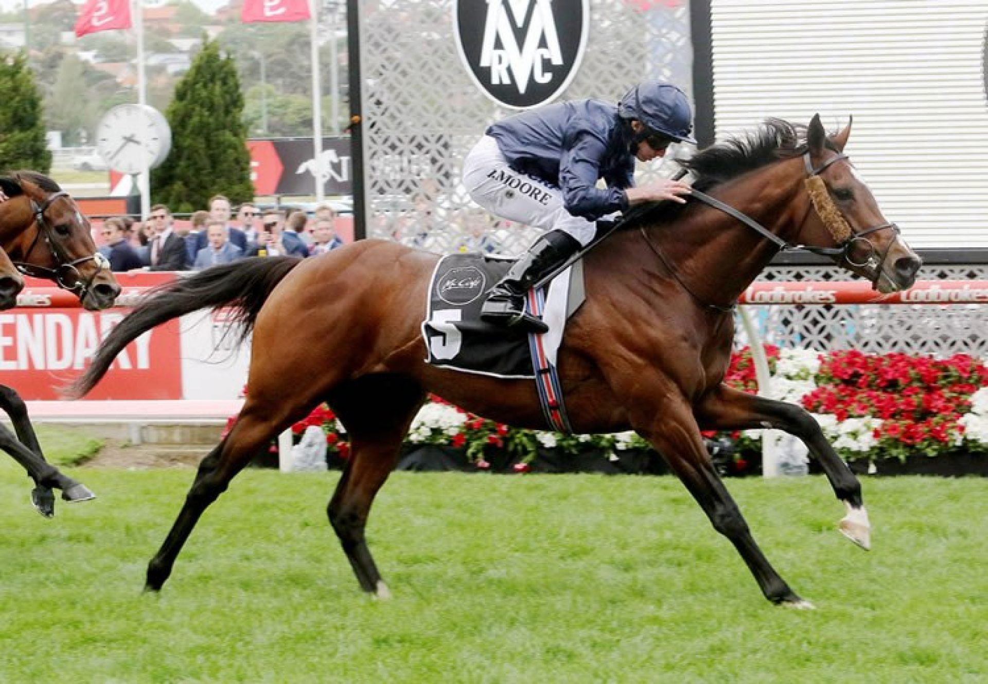 Hunting Horn (Camelot) winning the Gr.2 MVRC Moonee Valley Gold Cup