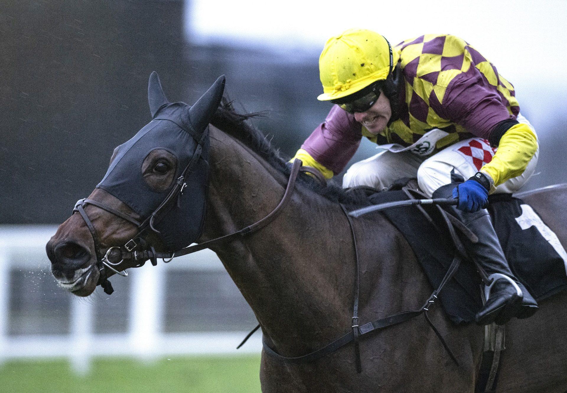 Western Ryder (Westerner) winning a novices' hurdle at Cheltenham