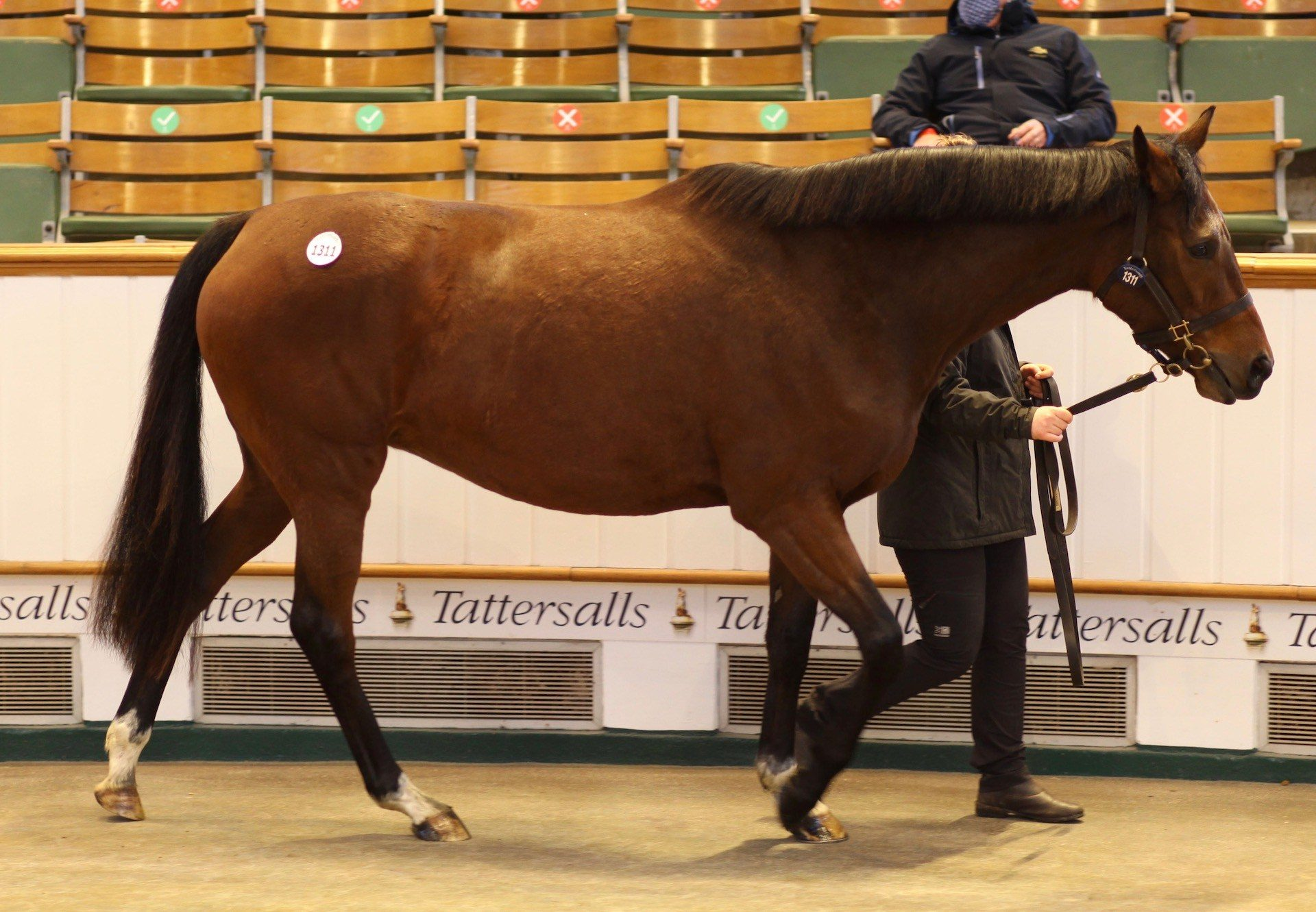 It's Magic sells In Foal To Ten Sovereigns for 260,000gns at Tattersalls