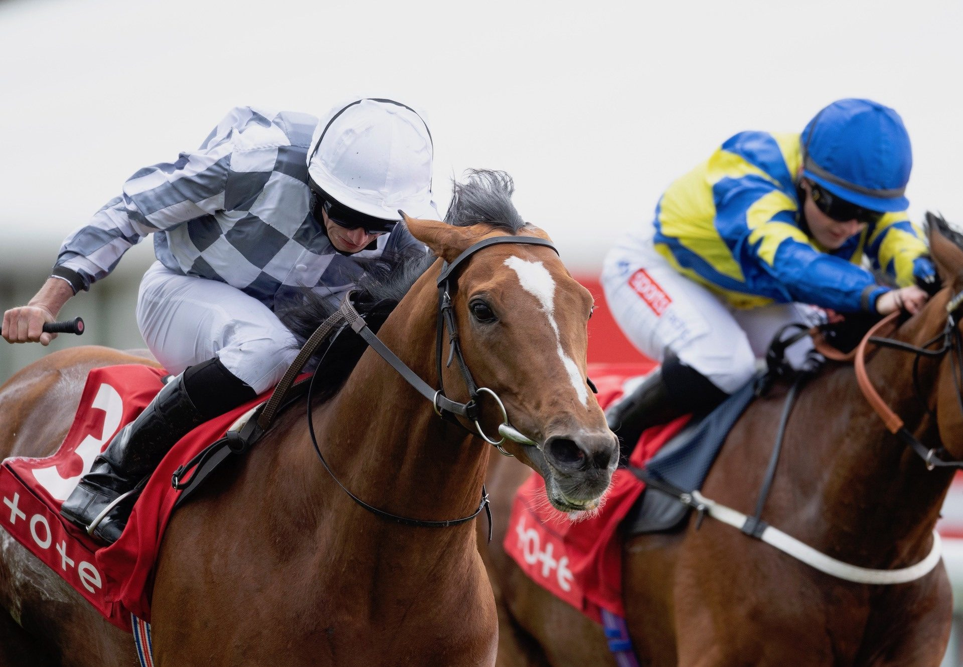 Invitation Only (Flemensfirth) winning the G3 Total Event Rental Novice Chase at Punchestown