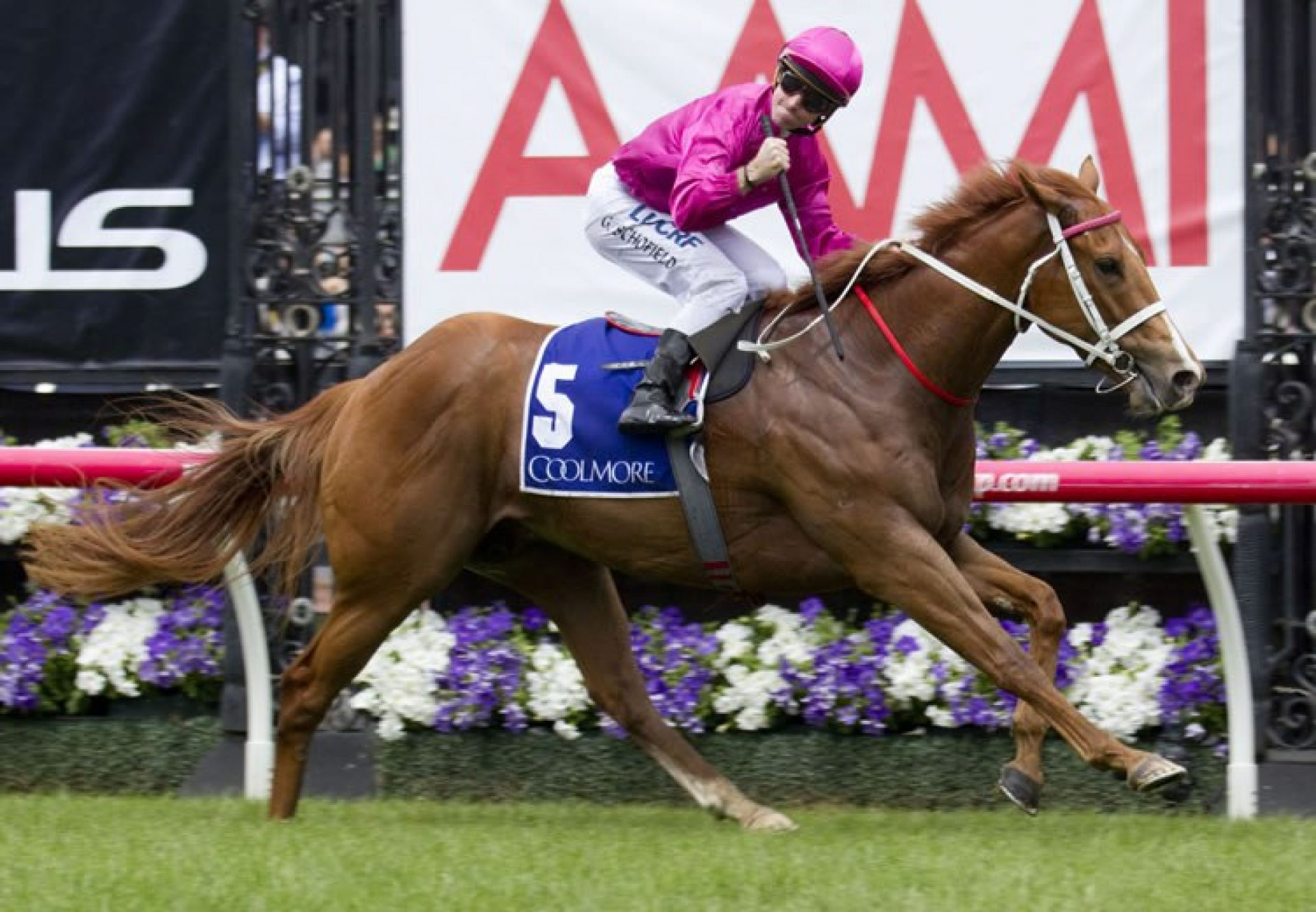 Japonisme (Choisir) winning the G1 Coolmore Stud Stakes at Flemington