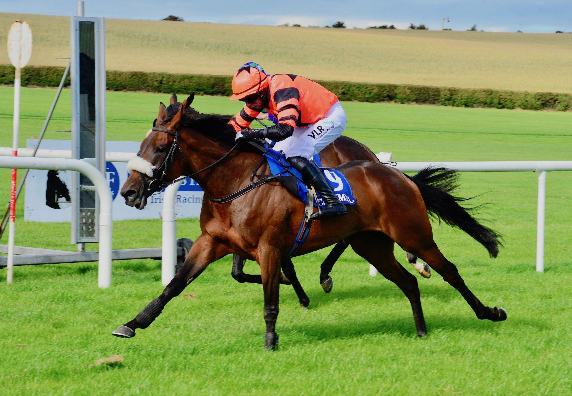 Jelona (Milan) Wins The Mares Maiden Hurdle At Clonmel