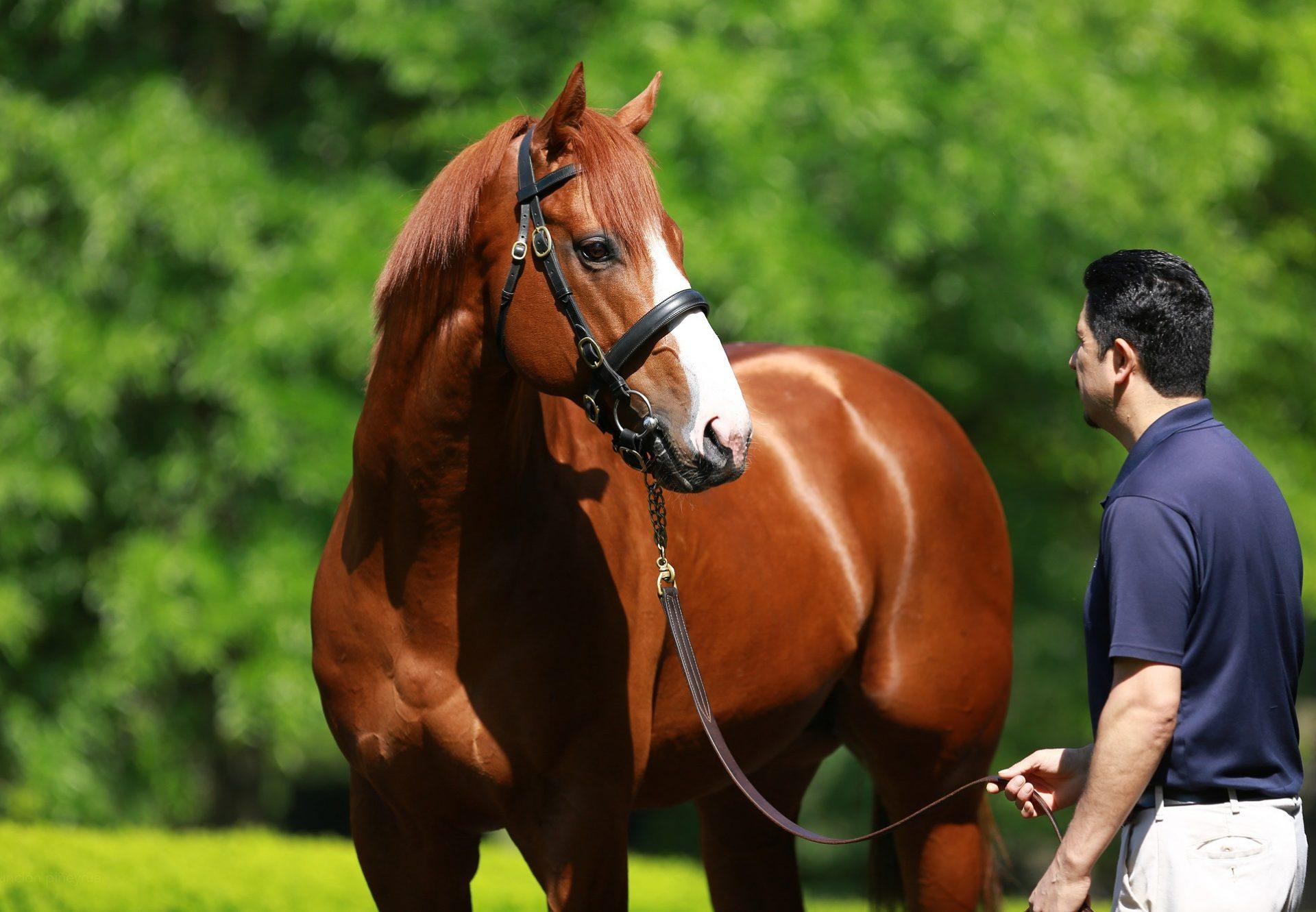 Chief Cicatriz (Munnings) wins the David M Vance Stakes at Remington Park