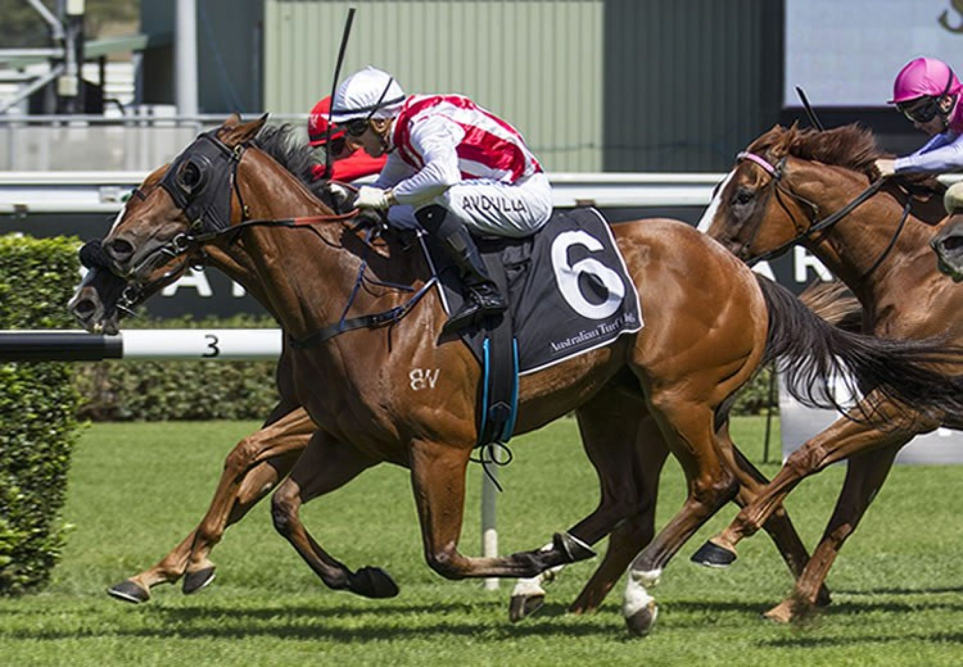 Kaepernick (Fastnet Rock) winning the G3 Southern Cross Stakes at Randwick