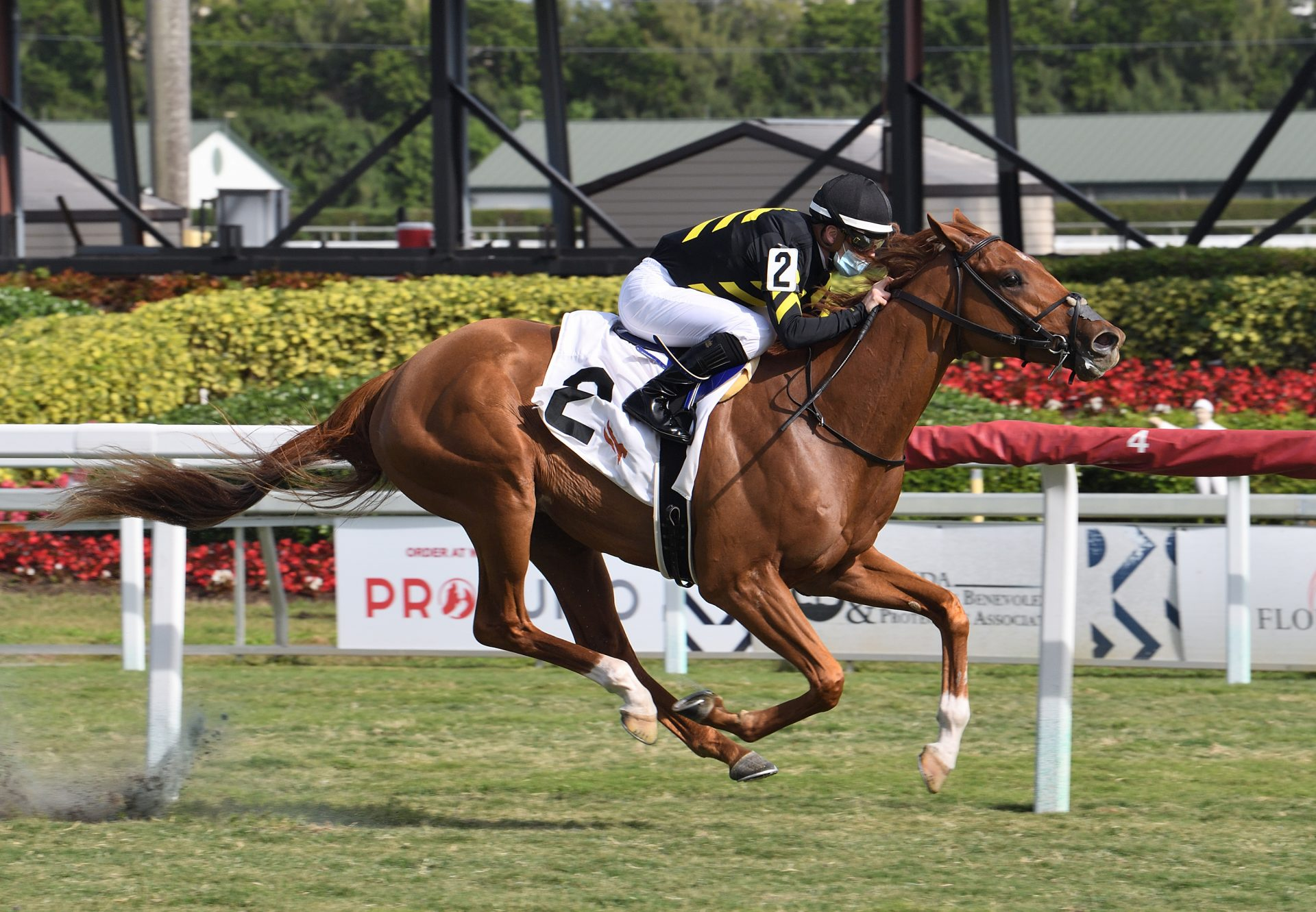 Kentucky Pharoah (American Pharoah) Wins The Listed Dania Beach Stakes