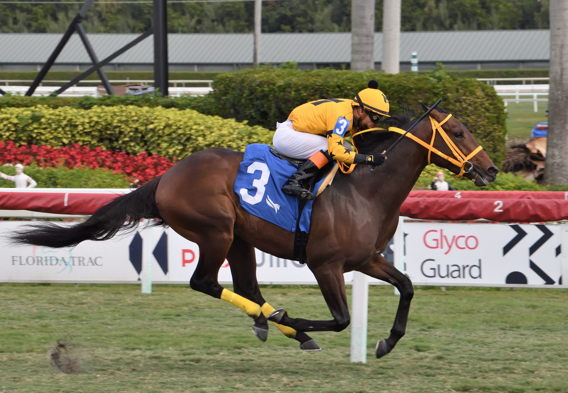 King Of Dreams (Air Force Blue) Breaking Maiden At Gulfstream Park
