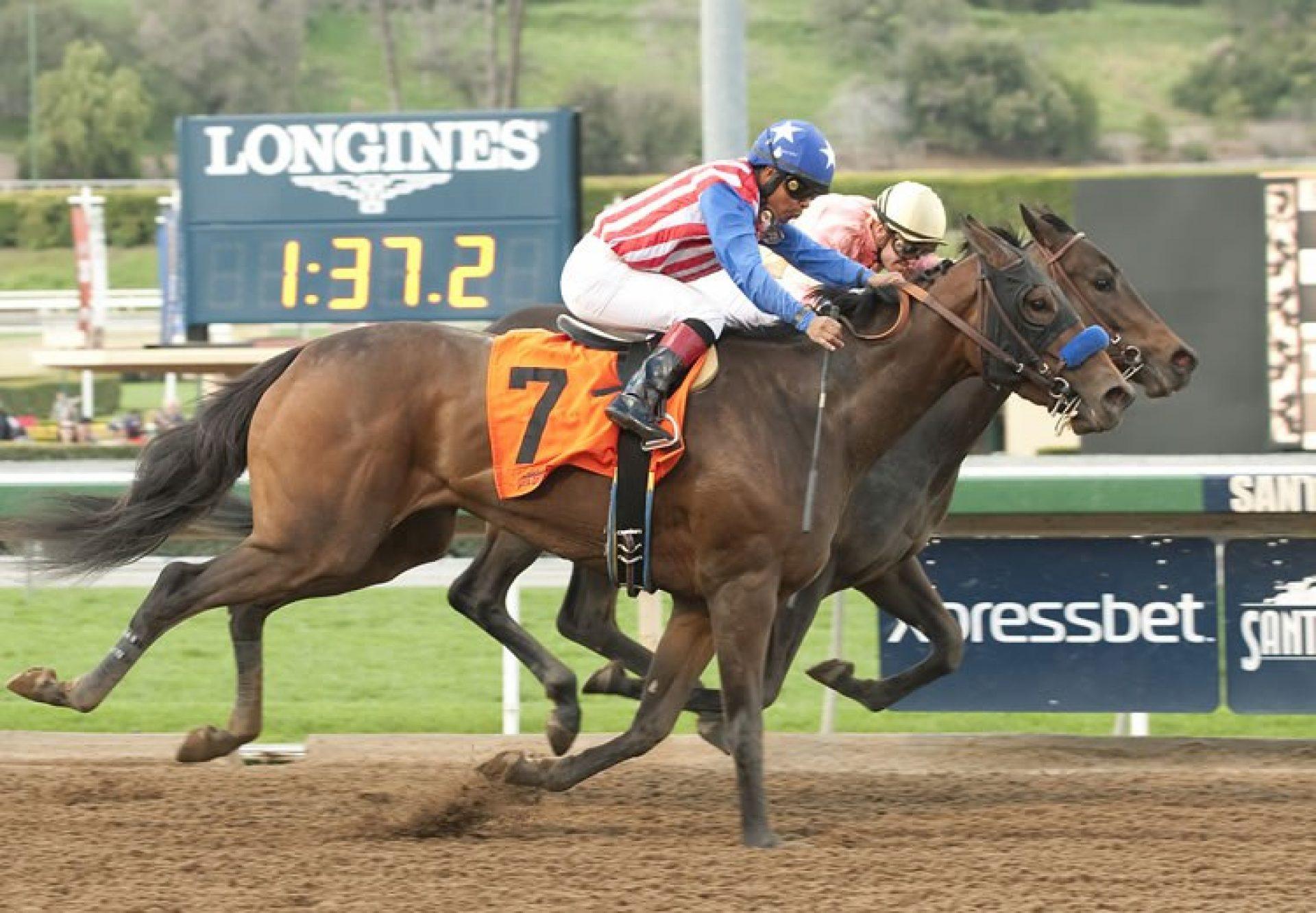Luminance (Tale Of The Cat) winning an allowance race at Santa Anita