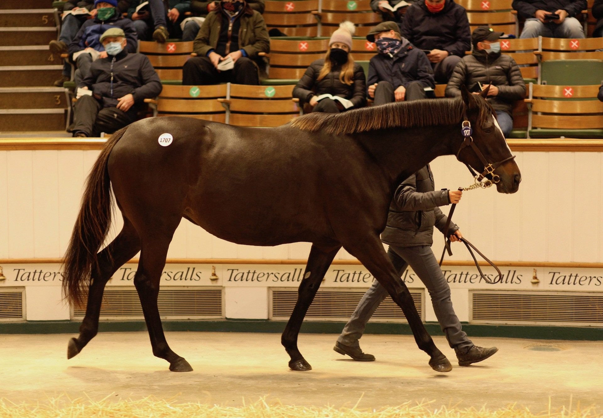 Lady In Lights Sells In Foal To No Nay Never at Tattersalls