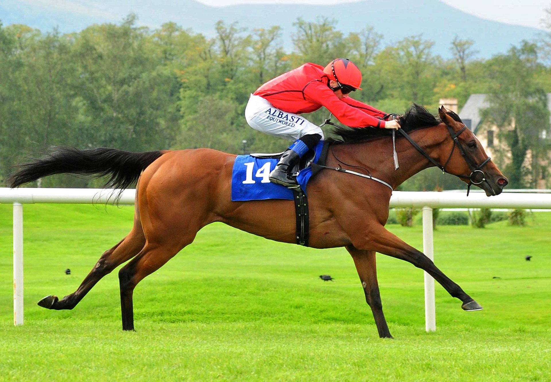 Beautiful Mind (So You Think) winning the Listed Jungle Dawn Classic at Ascot