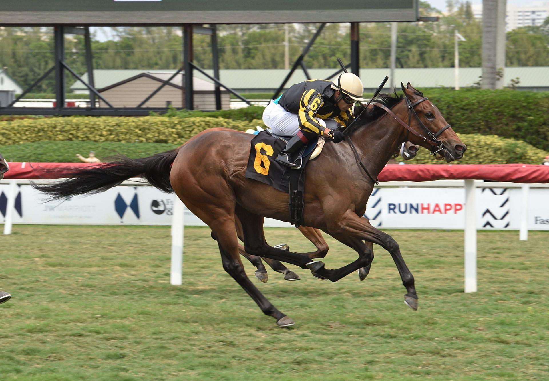 Lashara (American Pharoah) Winning Gulfstream Park Maiden