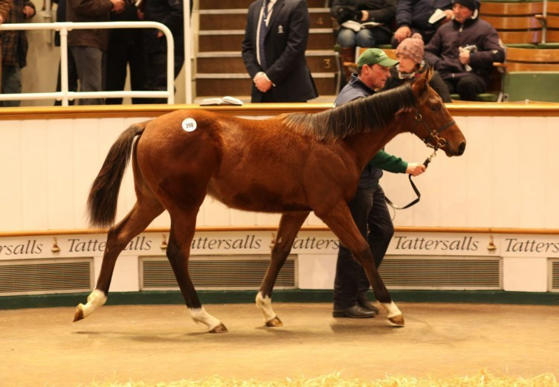 Ivawood ex Quickstep Queen colt selling for 100,000gns at Tattersalls