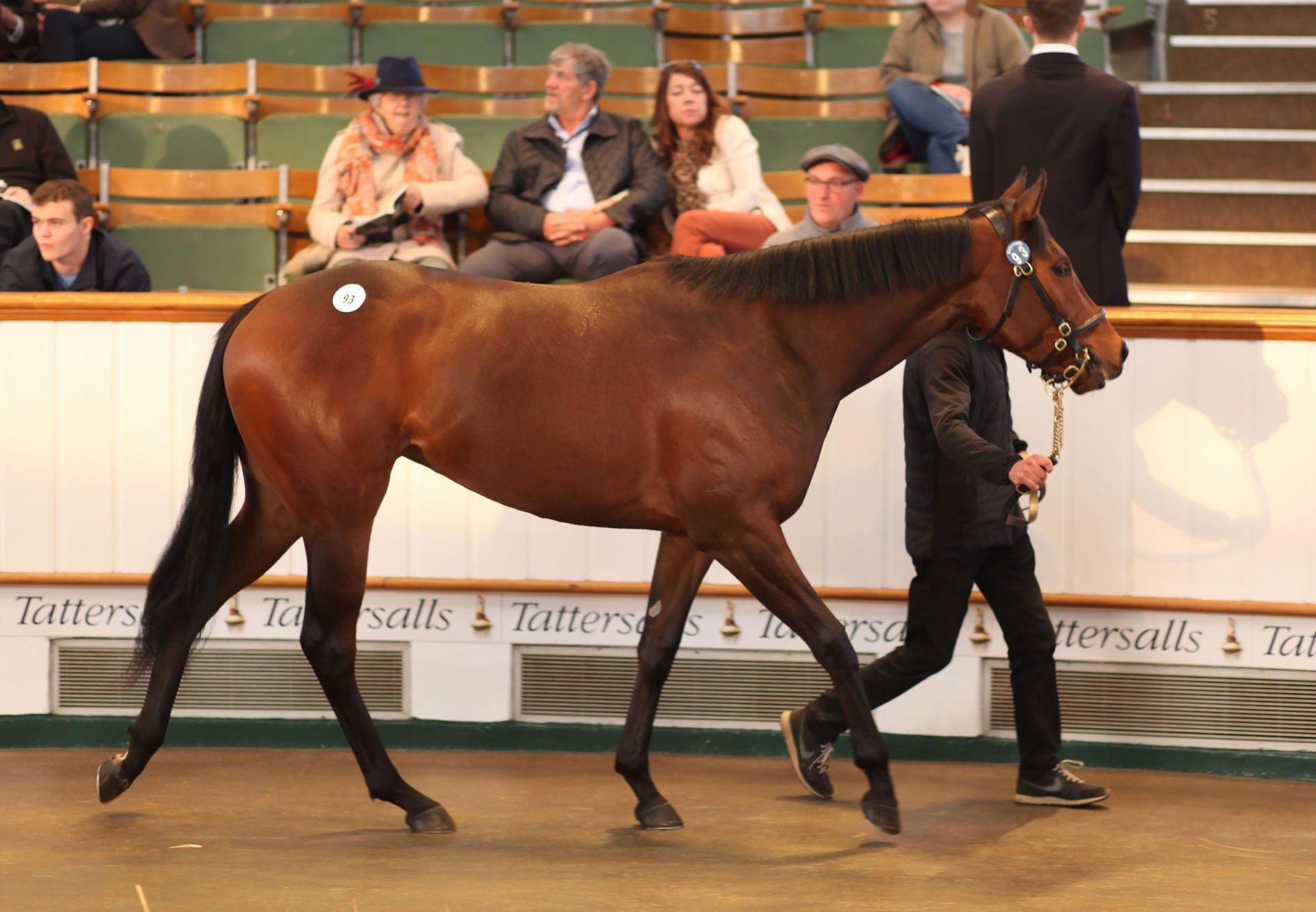 Lot 93 Competitive Edge ex Hug and Kiss filly sold for 280,000gns at the Craven Breeze Up Sale