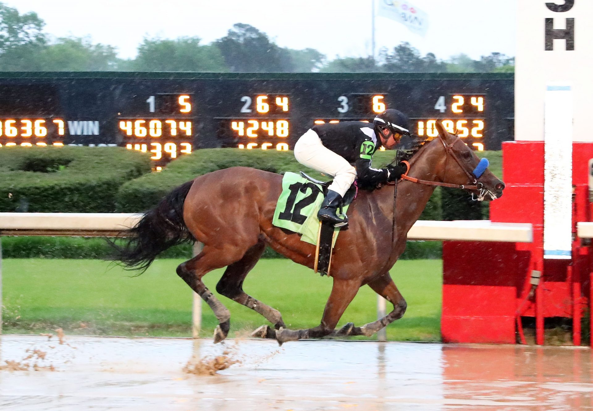 Merneith (American Pharoah) Breaks Maiden at Oaklawn Park