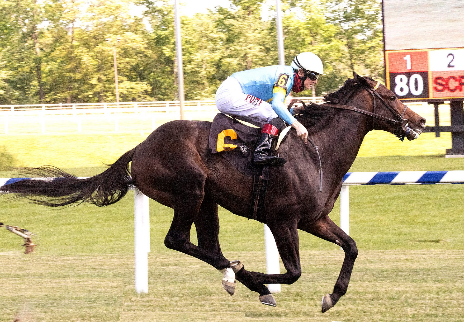 Maryland Mo (Uncle Mo) wins Laurel Maiden