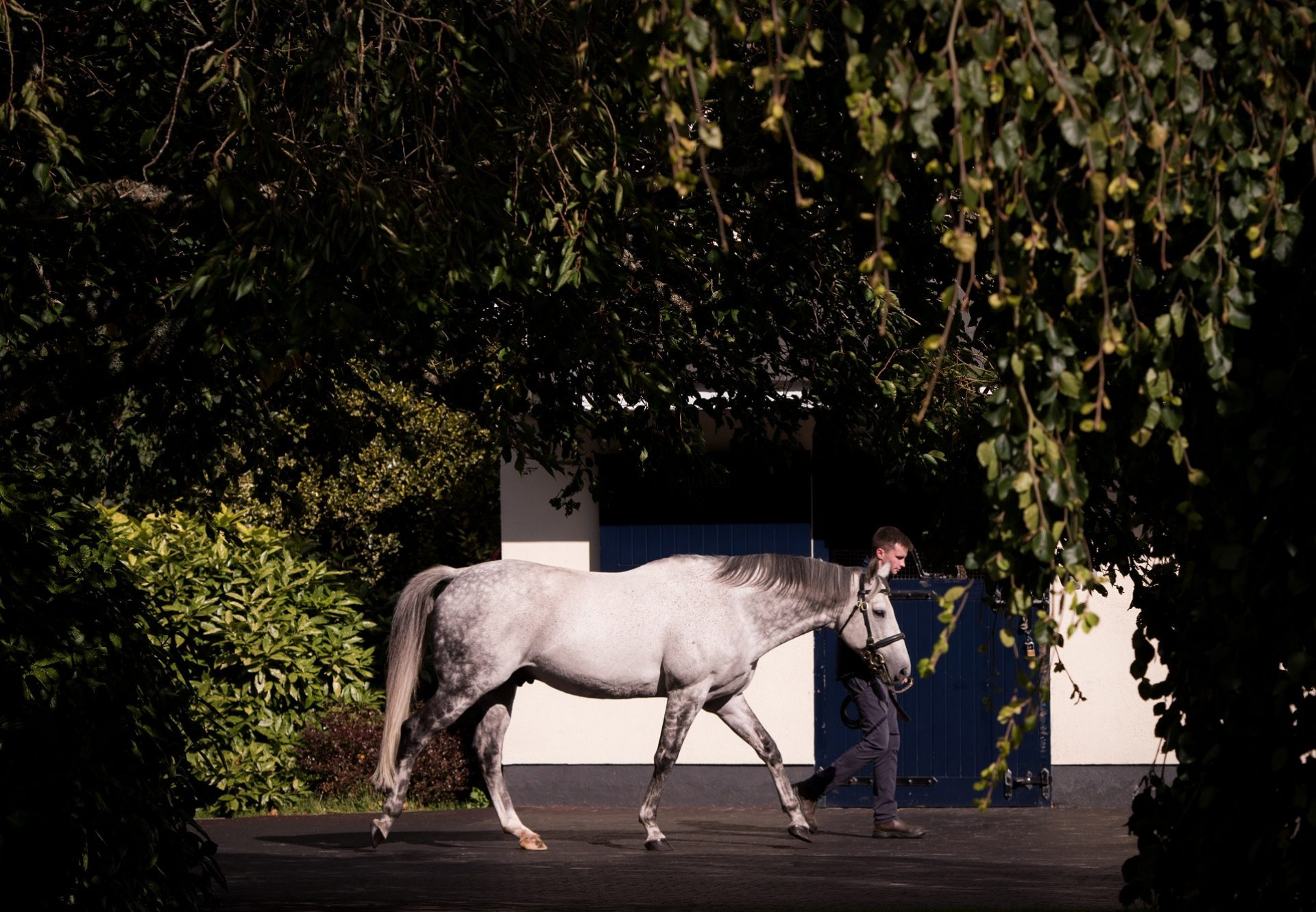 Mastercraftsman Stallion Yard