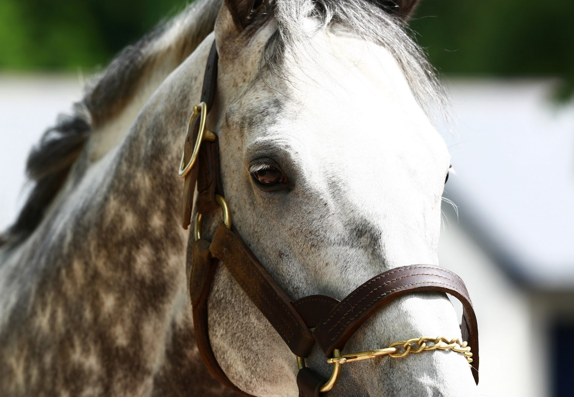 Mastercraftsman Close Up