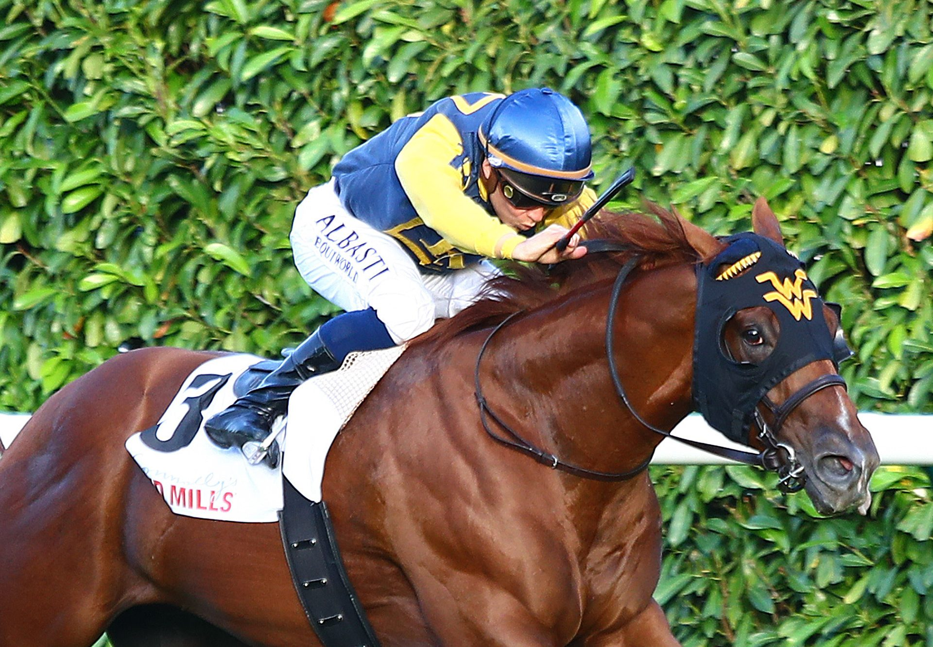 Maven (American Pharaoh) winning the Gr.3 Prix Du Bois at Chantilly