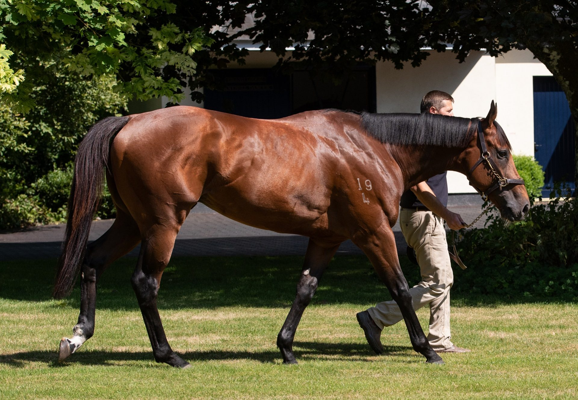 Merchant Navy (Fastnet Rock) pictured at Coolmore Ireland