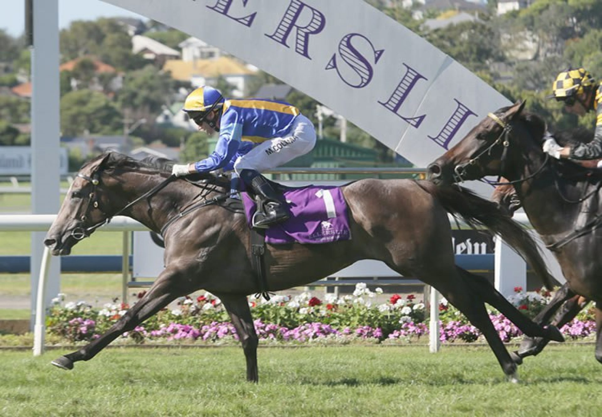 Mime (Mastercraftsman) winning the McKee Family Sunline Vase at Ellerslie
