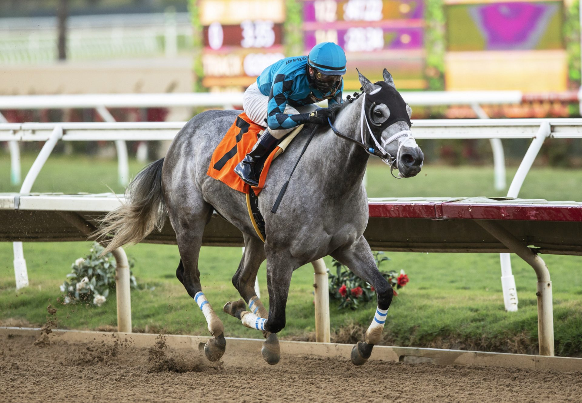 Mo See Cal (Uncle Mo) wins the Betty Grable Stakes at Del Mar