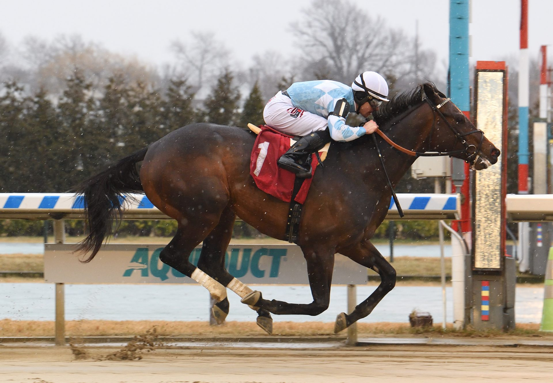 Modernist (Uncle Mo) Wins Aqueduct Maiden