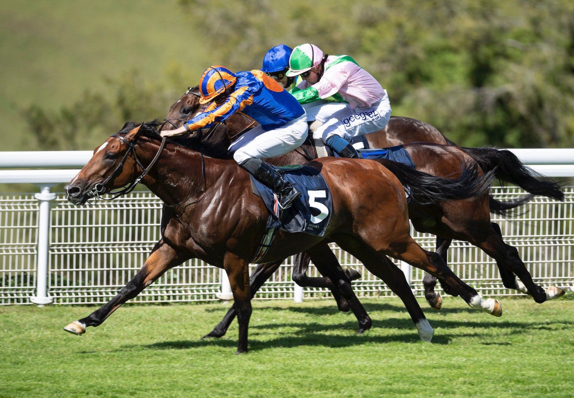 Joie De Soir (Fastnet Rock) Makes A Winning Debut At Deauville