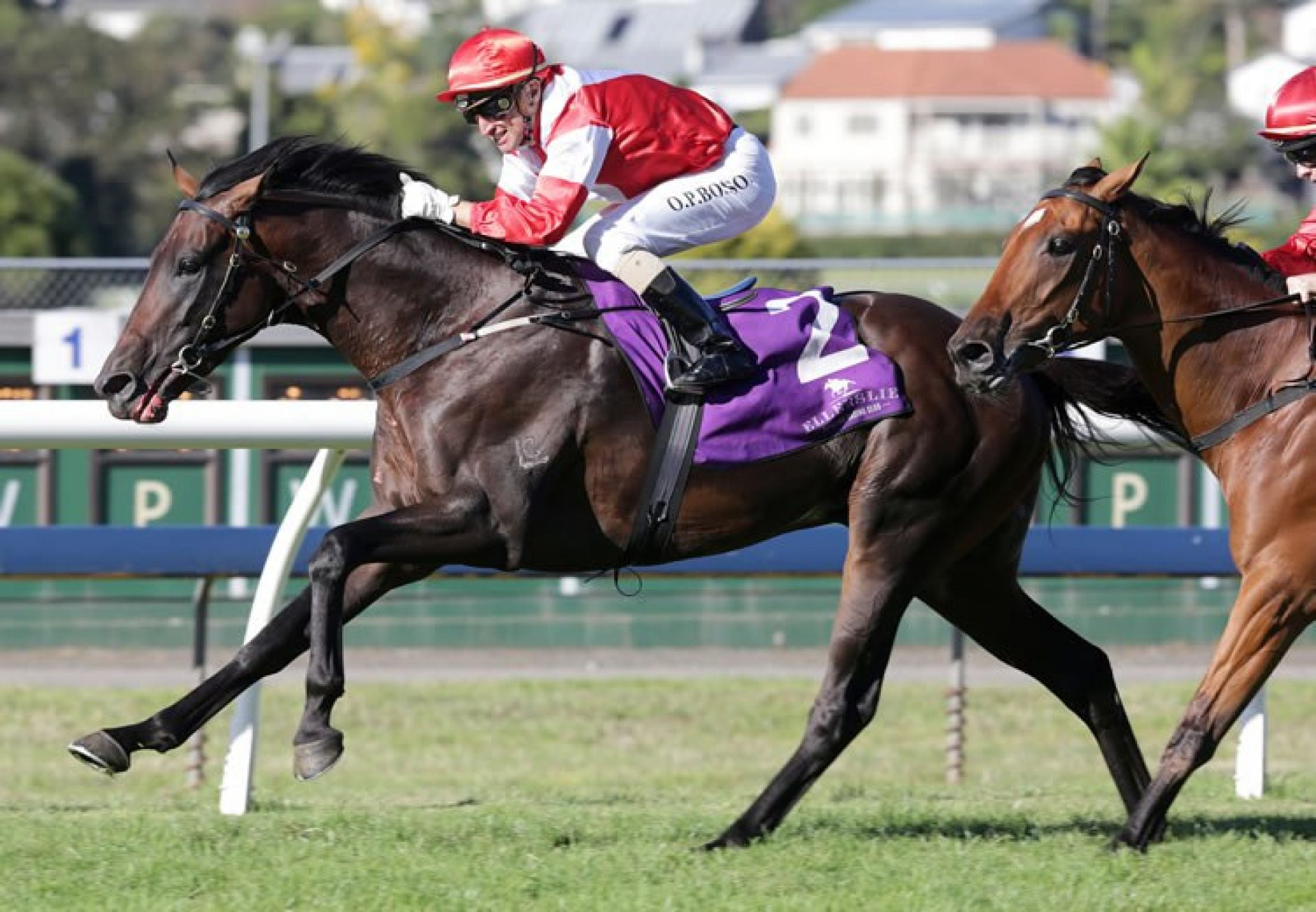 Mongolian Khan (Holy Roman Emperor) winning the G1 New Zealand Derby at Ellerslie