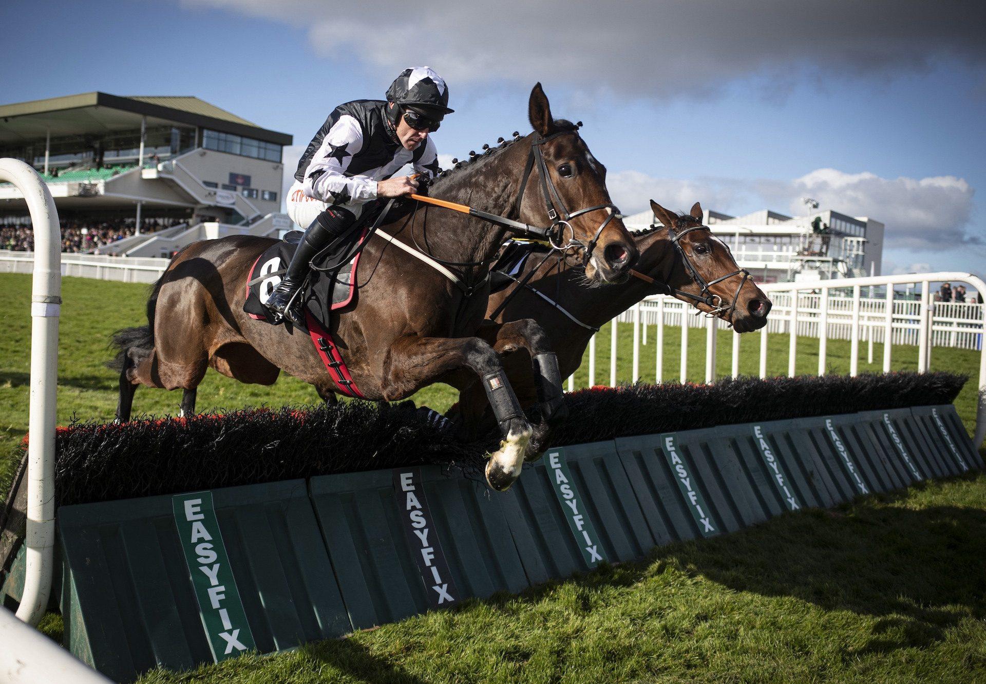 Mount Ida (Yeats) Wins At Galway