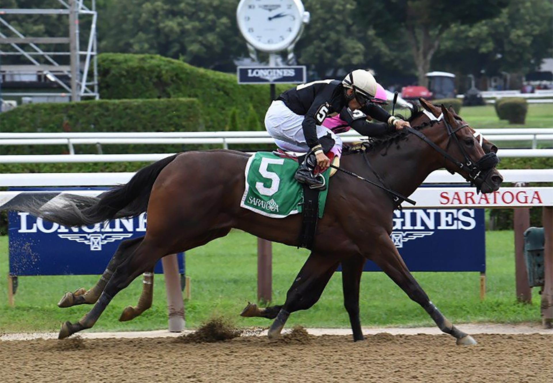 My Italian Rabbi (Competitive Edge) winning the Stillwater Stakes at Saratoga