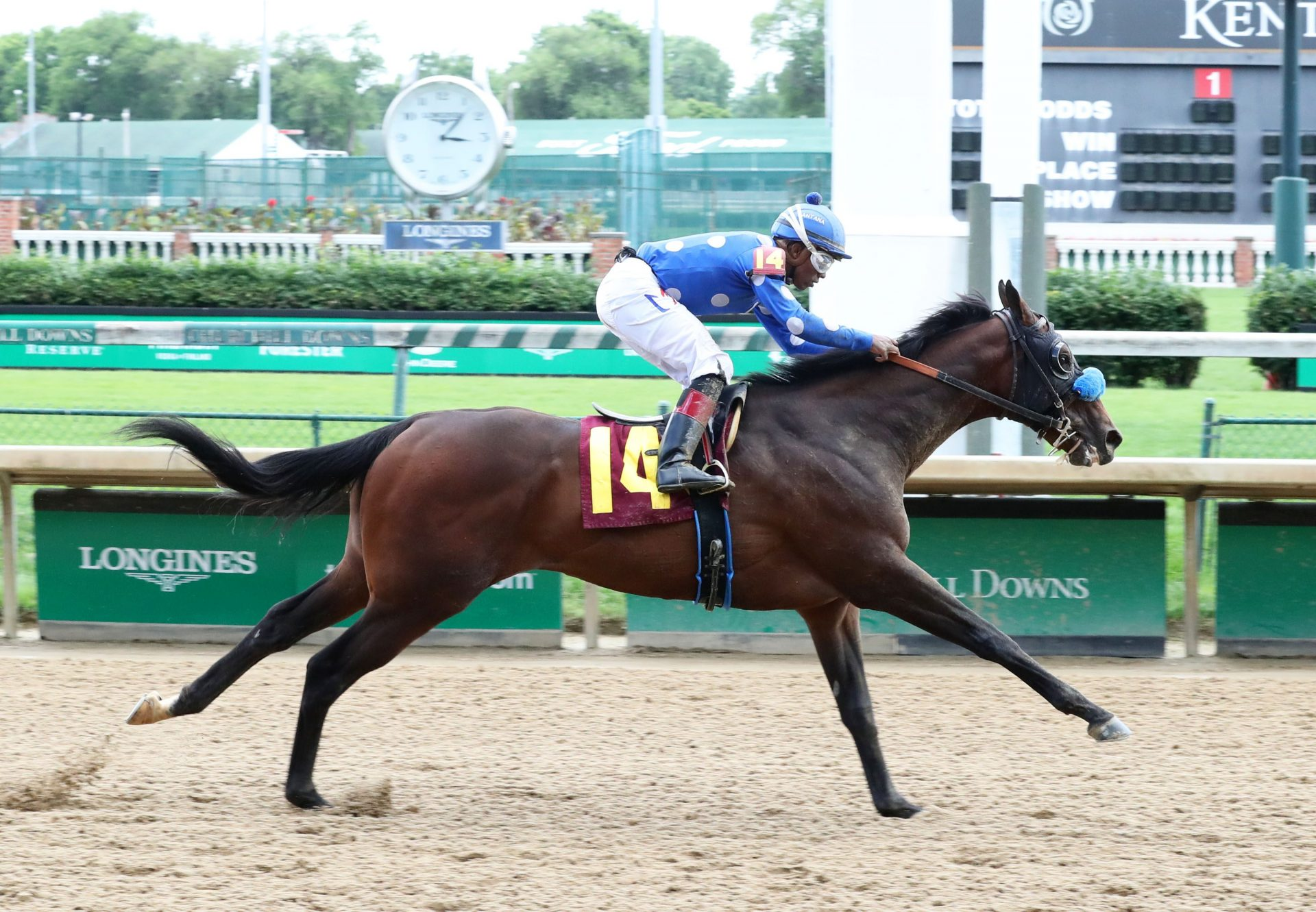 Natural History (Competitive Edge) winning a Churchill Maiden