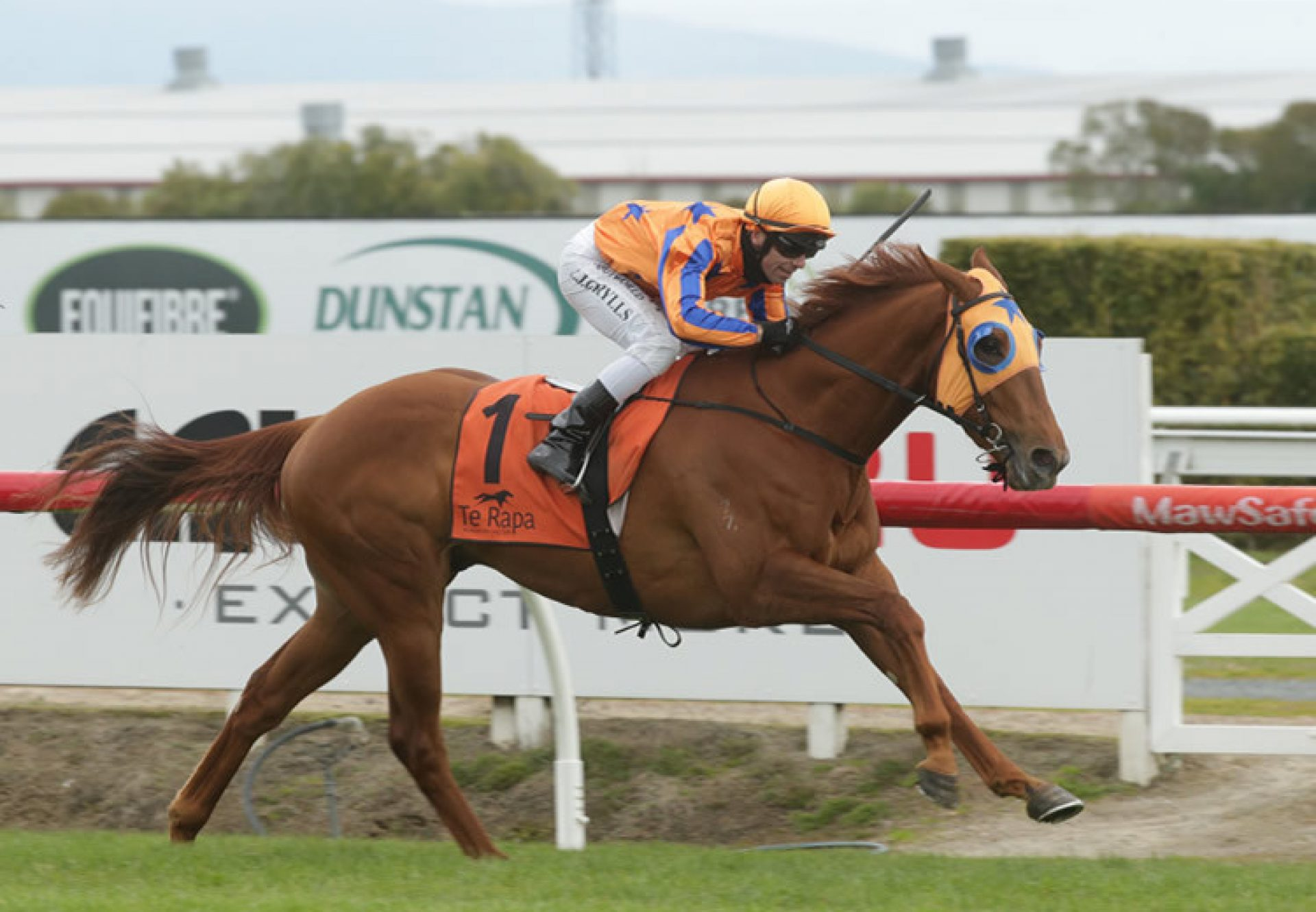 Need Is Say More (No Nay Never) wins the Gr.3 Northland Breeders Stakes at Te Rapa