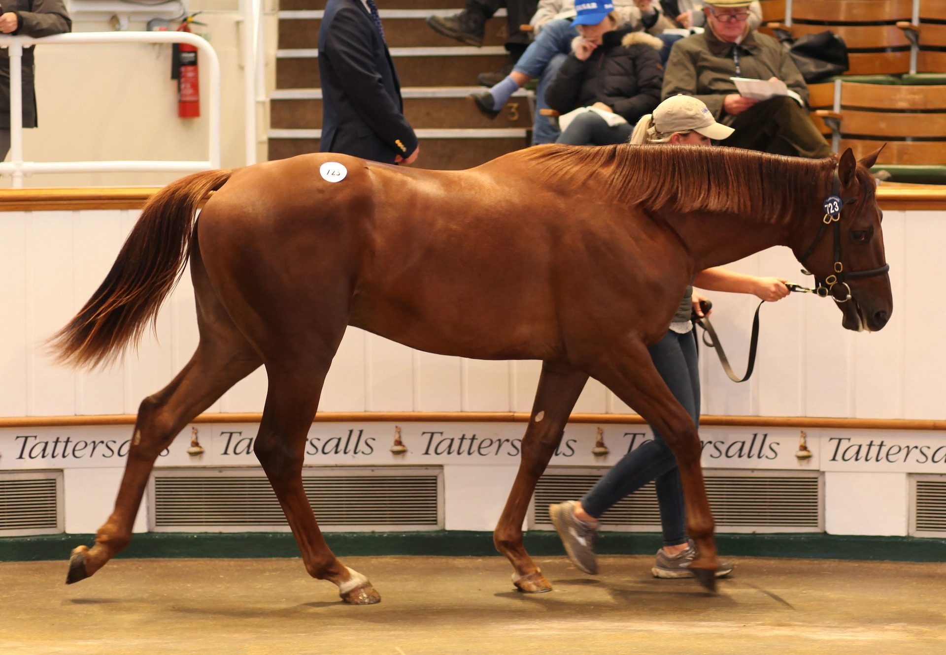 No Nay Never Colt Breaks Records At Tattersalls Book 2