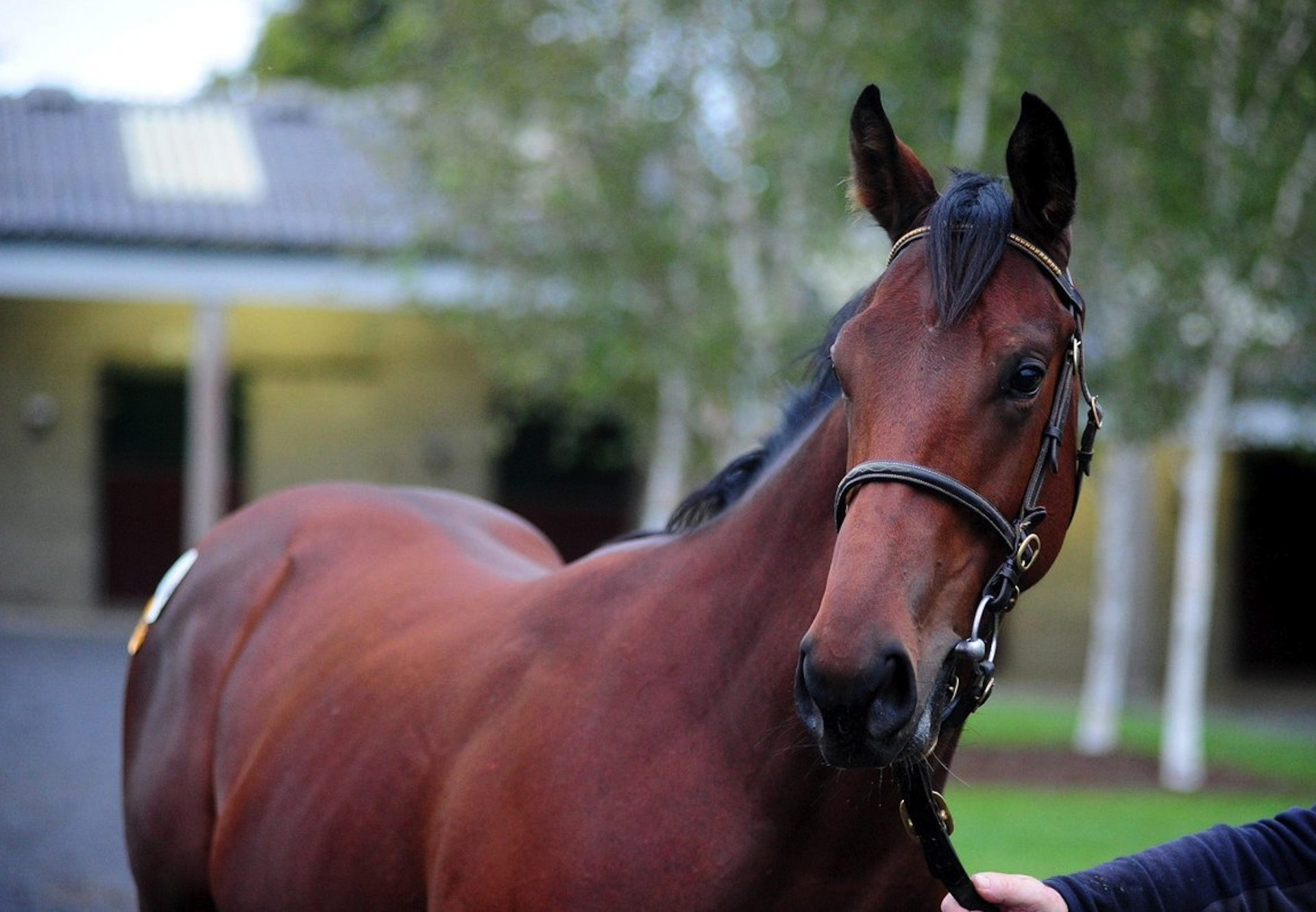 No Nay Never Colt Tops September Yearling Sale