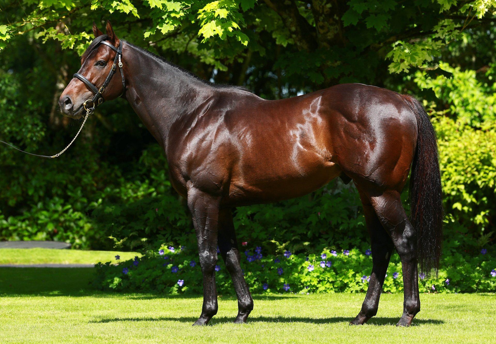 Pride Of Dubai ex Isstoora filly foal