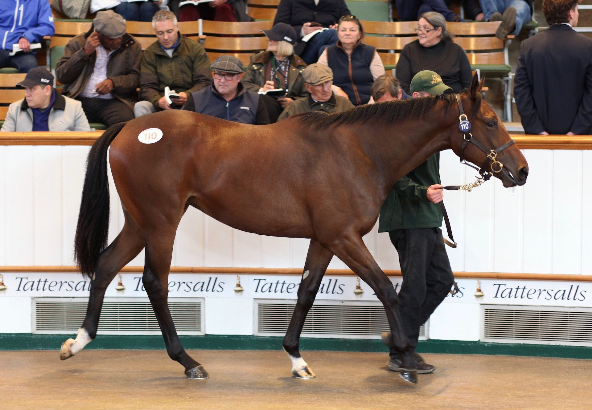 No Nay Never Filly Ex Lady Ederle Tops Day 1 Of Tattersalls Book 1