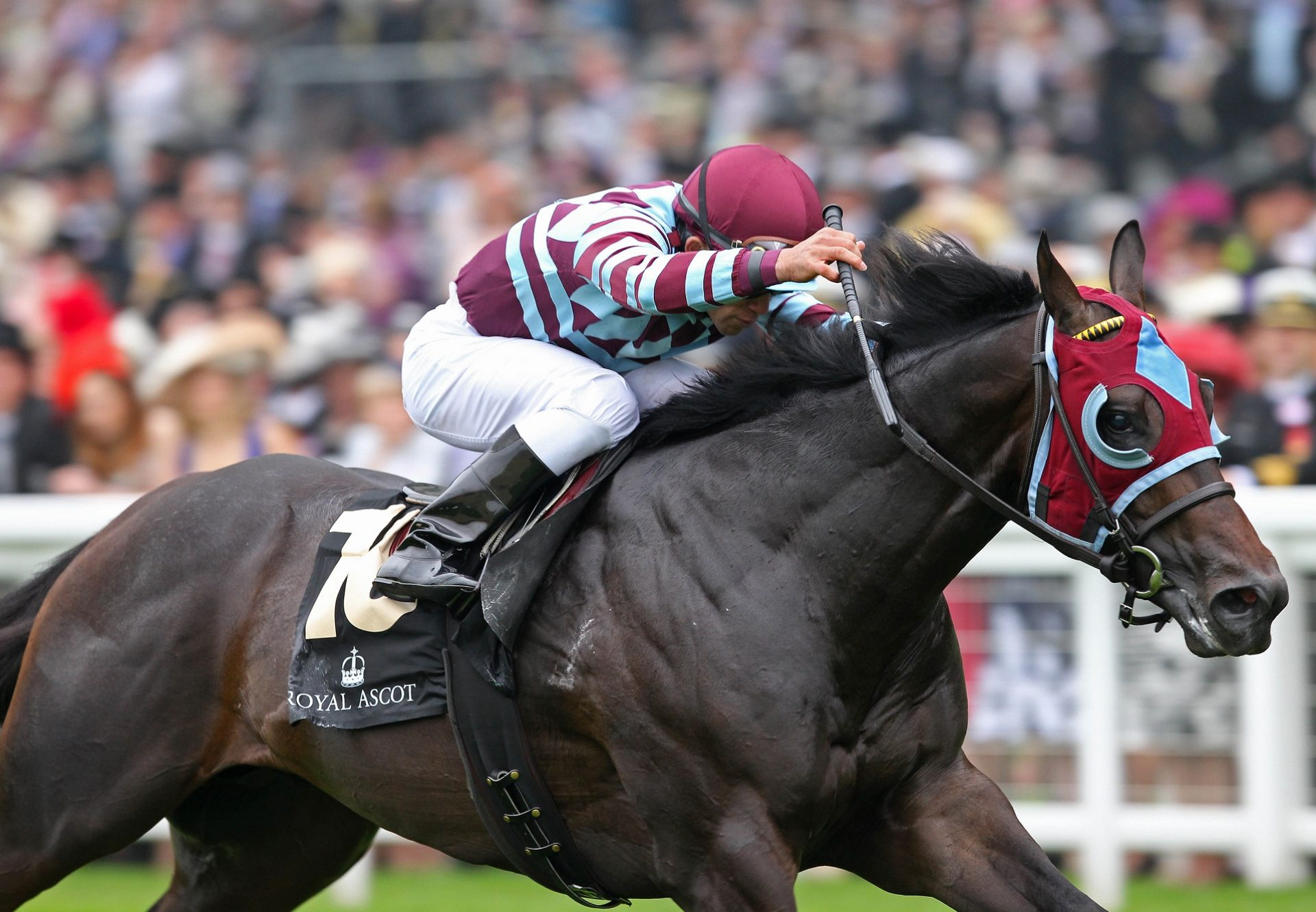 No Nay Never winning the G2 Norfolk Stakes at Royal Ascot