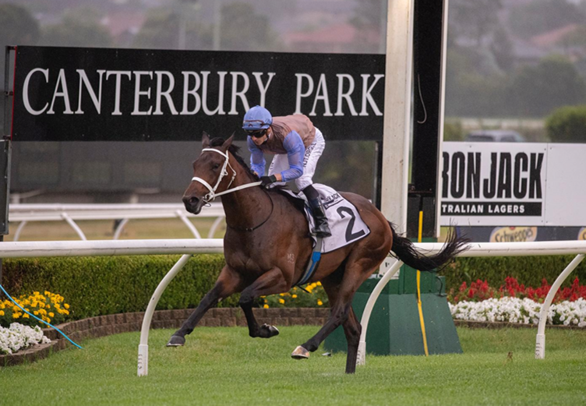O'President (Fastnet Rock) winning at Canterbury