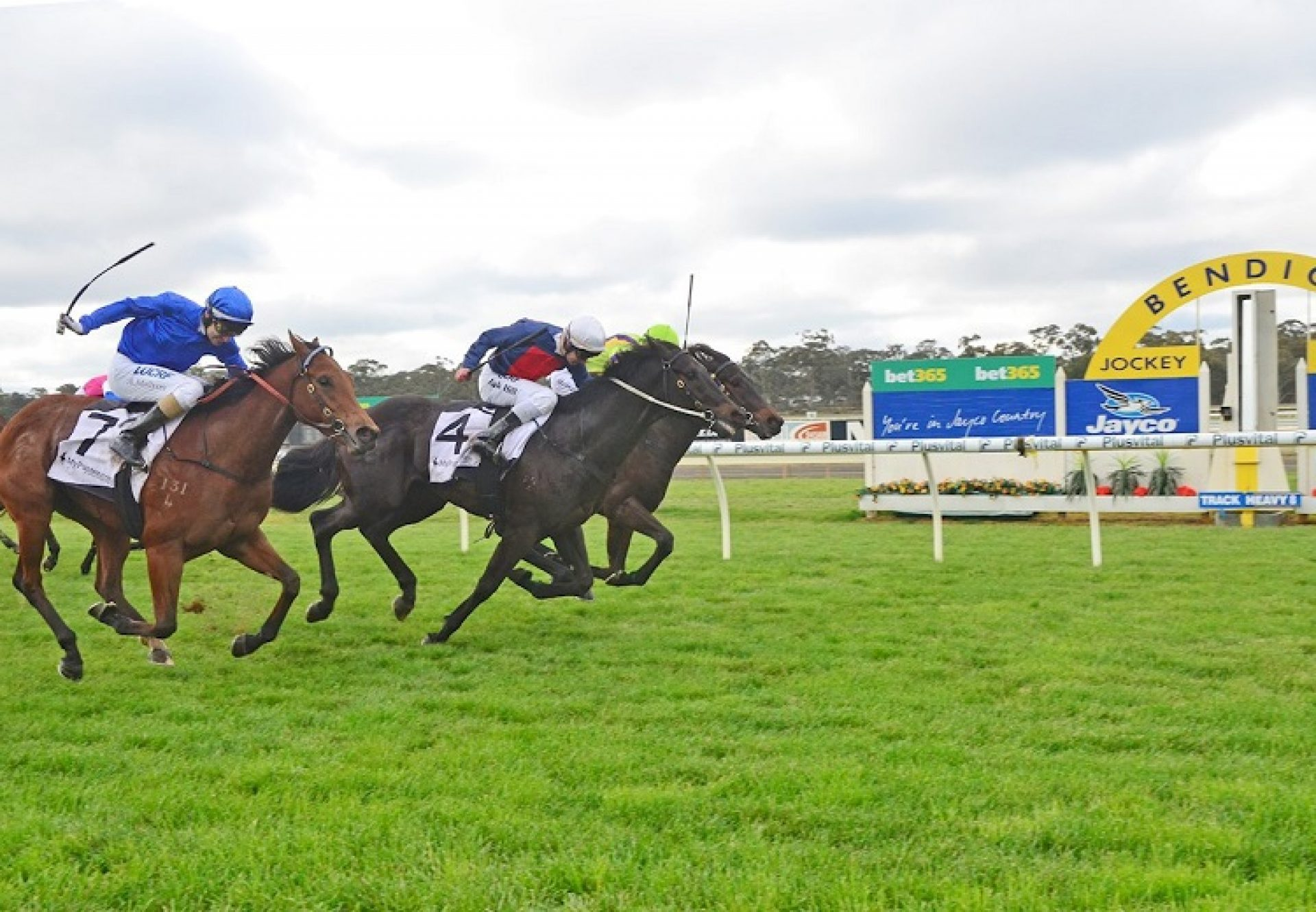 Octabello (Pierro) winning at Bendigo
