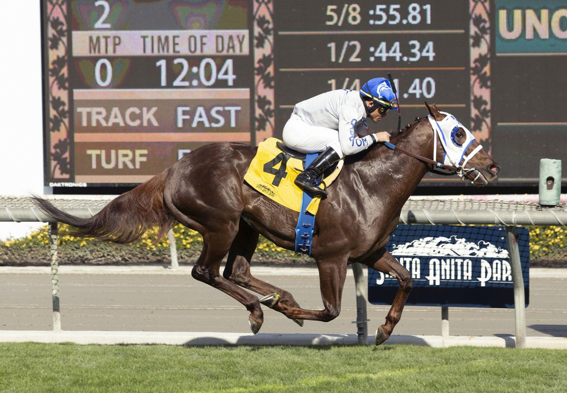 Phast Pharoah (American Pharoah) Breaks Maiden At Santa Anita