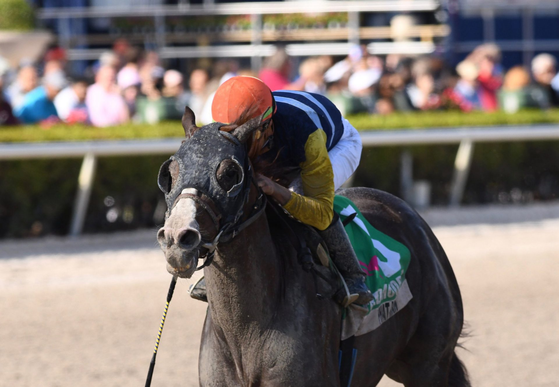 Phat Man (Munnings) Wins Gr.3 Fred Hooper at Gulfstream Park