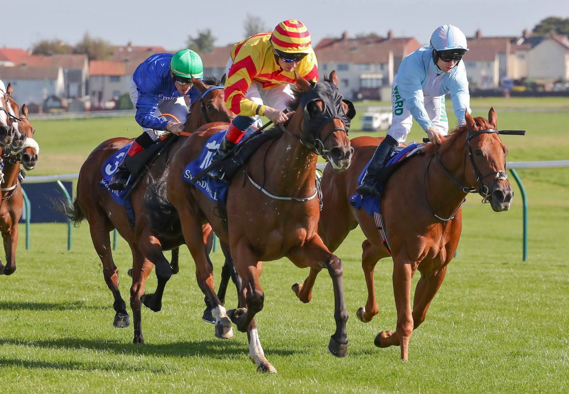 Piece Of Paradise Becomes Latest Stakes Winner By Holy Roman Emperor