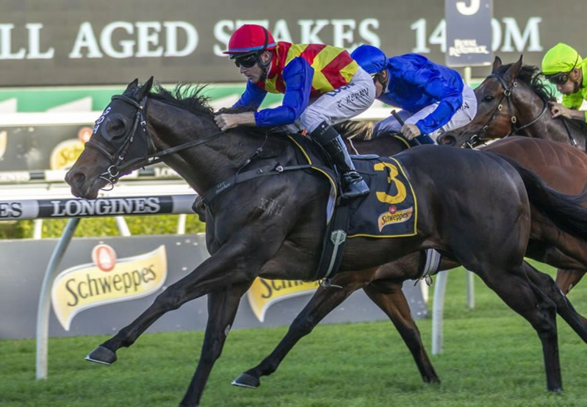 Pierata (Pierro) winning the G1 All Aged Stakes at Randwick